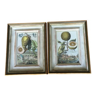 1900s English Hand Colored Engravings of Citrus Fruits, Framed - a Pair For Sale
