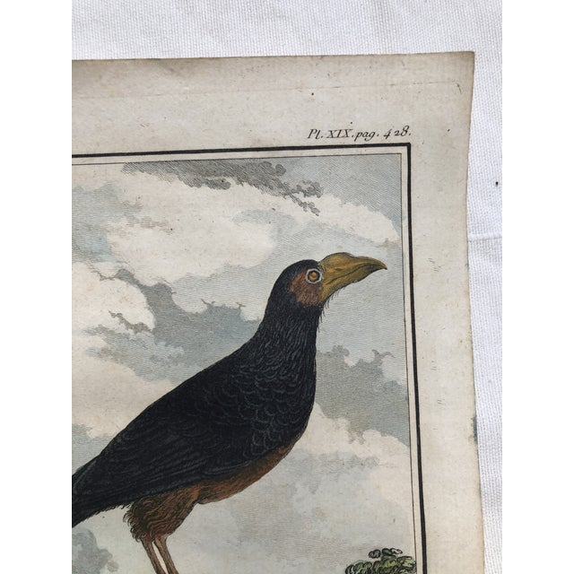 18th Century French Bird Engraving Signed by Jacques De Sève Featuring an Anis For Sale - Image 10 of 13