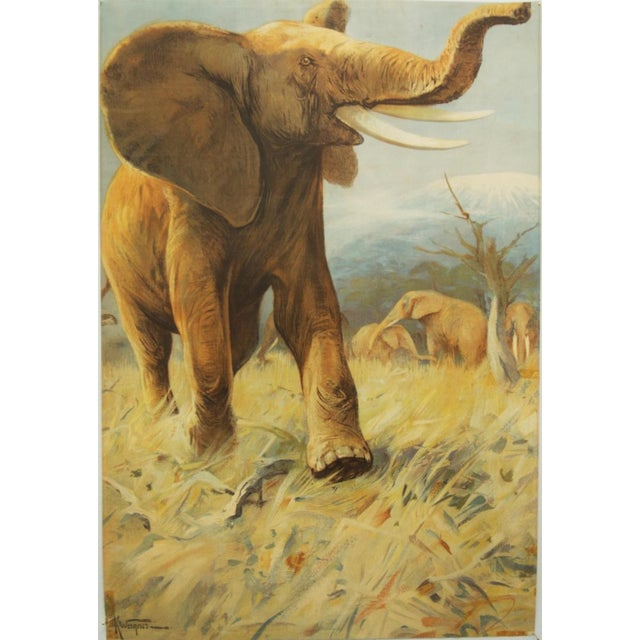 This vintage school poster depicts an elephant. It is signed K. Wagner and was originally painted in 1922. This is...