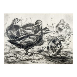 Ducklings Study Drawing For Sale