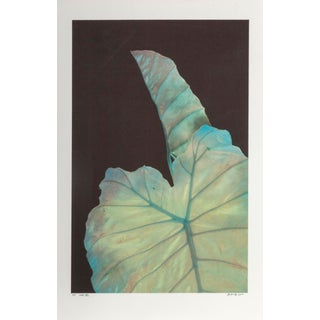 "Michael Knigin, ""Leaf Iii"", Photograph For Sale"