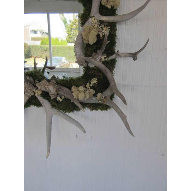 Antler and Preserved Moss Mirror For Sale In New York - Image 6 of 7