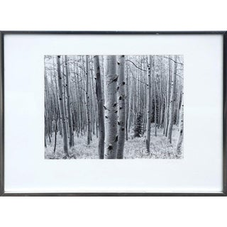 John H. Johnson Thick Aspen Grove 1978 For Sale