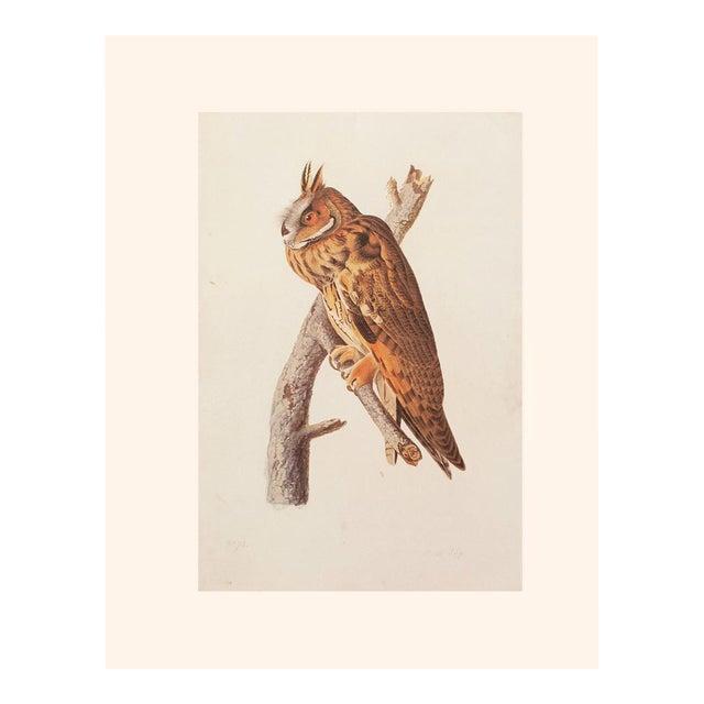 Stunning Long-Eared Owl by John J. Audubon, Vintage Cottage Print For Sale