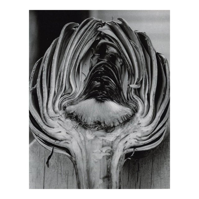 Cynara Scolymus by Horst P. Horst, 1945 For Sale
