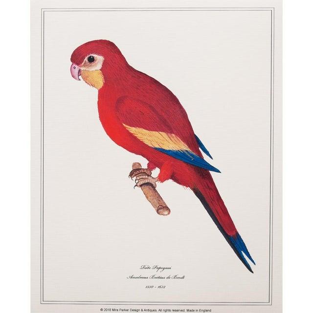 1590s Parrot Set of 3 by Anselmus De Boodt For Sale - Image 4 of 10