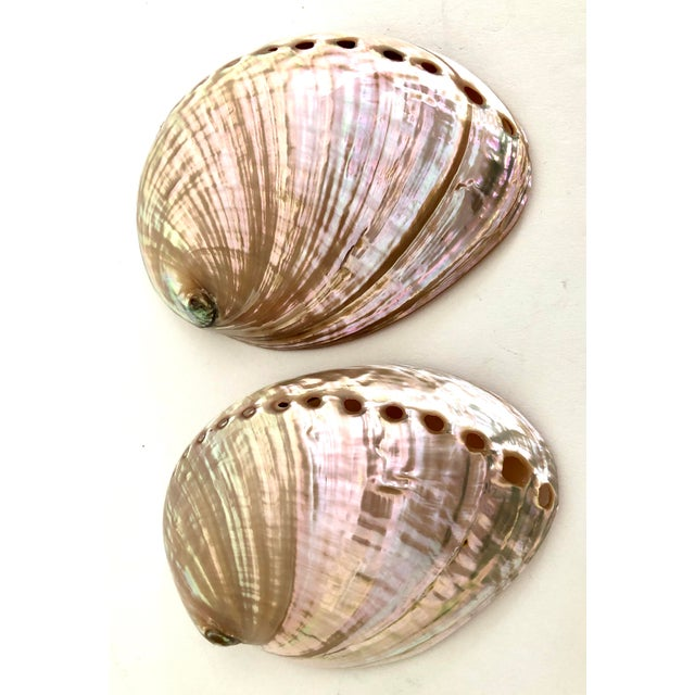 Australian Abalone Shells - a Pair For Sale - Image 4 of 5