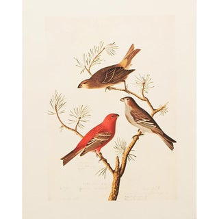 """1960s Cottage """"Pine Grosbeak"""" Lithograph by John James Audubon For Sale"""