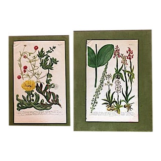 Vintage Hand Colored Botanical Prints - A Pair For Sale