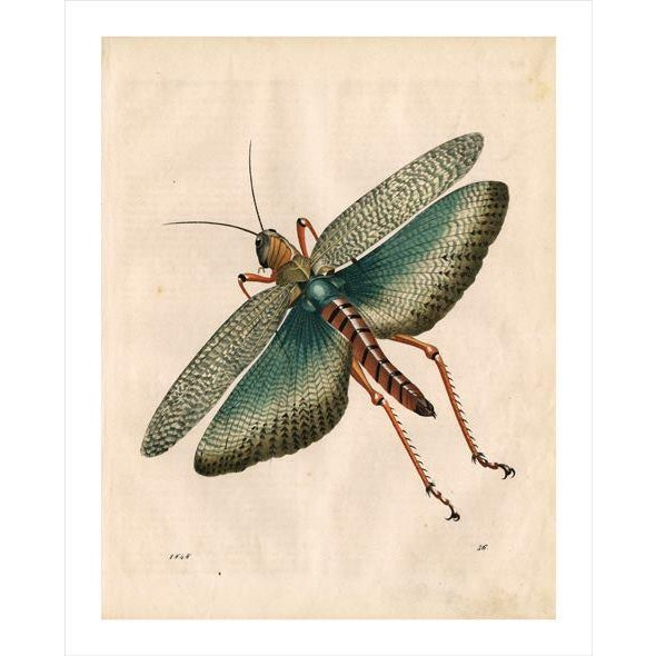 French Antique 'Grasshopper' Archival Print For Sale - Image 3 of 4