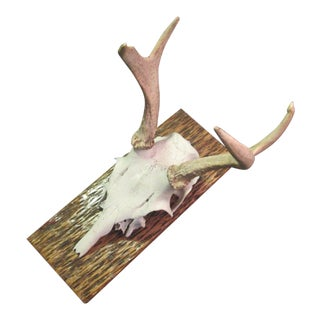 White Tail Deer Mount on Stained Tree Board For Sale