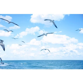 """Seagulls Flying over the Ocean"" Landscape Photograph For Sale"