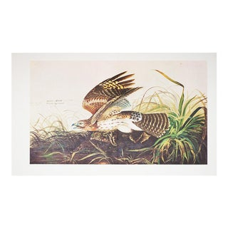 """1966 Audubon, Cottage Style """"Winter Hawk"""" Lithograph For Sale"""