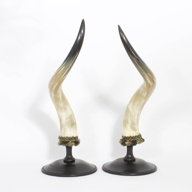 Contemporary Mid-Century Large and Dramatic Polished Horns on Mounts - A Pair For Sale - Image 3 of 9
