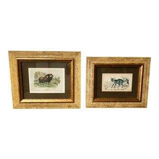 "19th C. British ""The Naturalist's Library"" Animal Prints - Set of 2 For Sale"