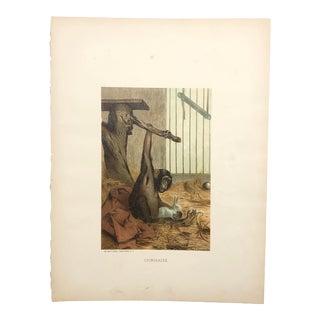 "Late 19th Century ""Chimpanzee"" Selmar Hess Print For Sale"