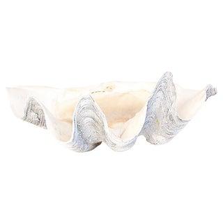 Monumental Salt Water Clam Shell