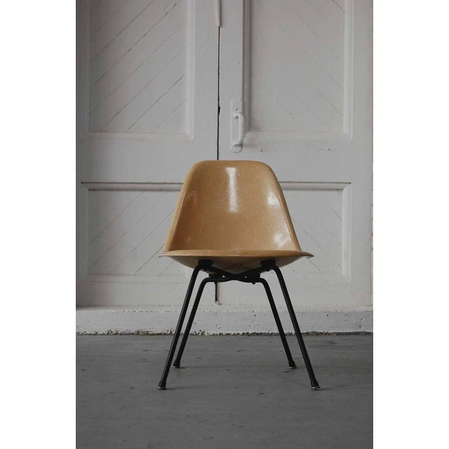 Fiberglass Early Eames Msx Chair For Sale - Image 7 of 7