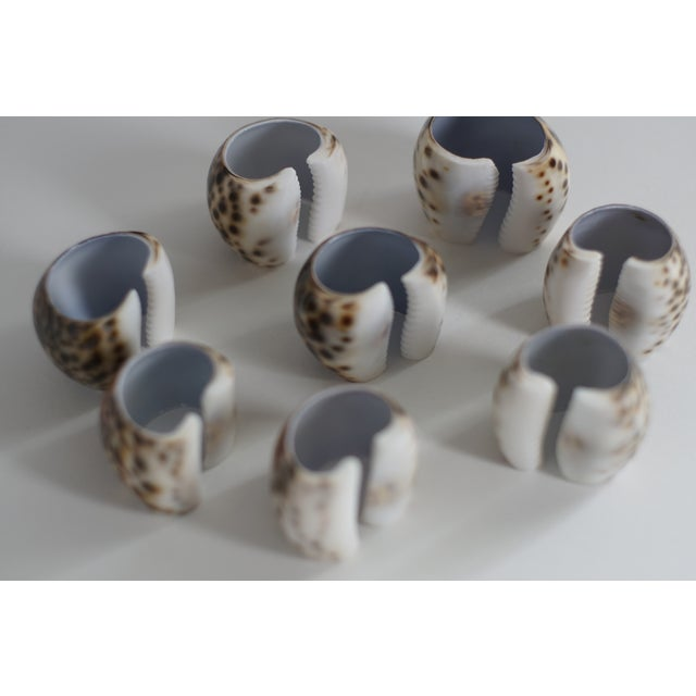 Vintage Tiger Cowrie Shell Napkin Rings- Set of 8 - Image 5 of 5