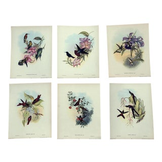 John Gould Hummingbird Lithographs, 1940s - Set of 6 For Sale