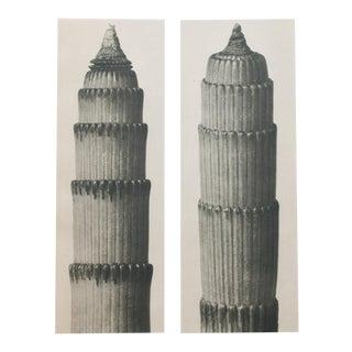 Karl Blossfeldt 2-Sided Photogravure N3-4