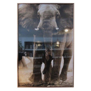 Elephant Photograph by Amber Arbucci For Sale