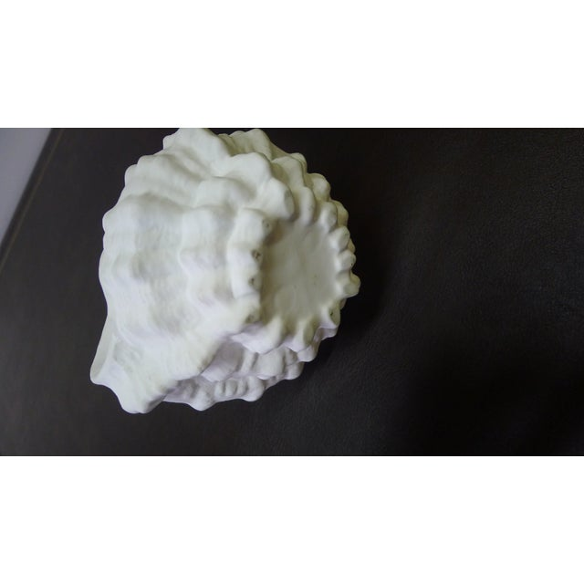 Organic Shell or Ammonite Form Bisque Vase For Sale In Los Angeles - Image 6 of 7