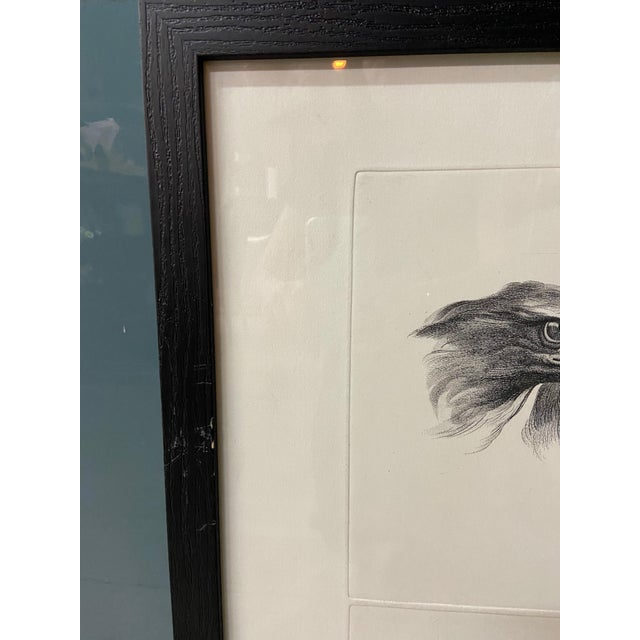 Man as Eagle - Physiognomic Heads Series Framed Illustration by Charles Le Brun For Sale - Image 11 of 12