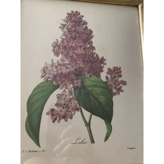 Reproduction Antique Botanical Print Lilac Framed For Sale - Image 10 of 12