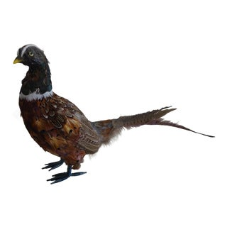 Feathered Pheasant Taxidermy Figure