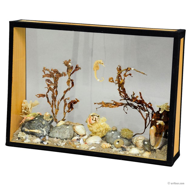 Wood Antique Natural Wunderkammer Aquarium Specimen For Sale - Image 7 of 7