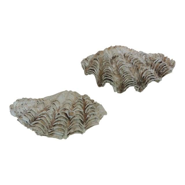Vintage Half Clam Sea Shells - a Pair - Image 1 of 5