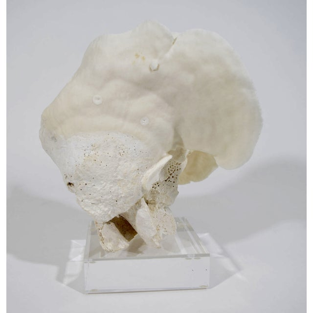 Coral on Lucite Stand - Image 4 of 4