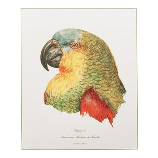 1590s Anselmus De Boodt Parrot Head Study Print For Sale