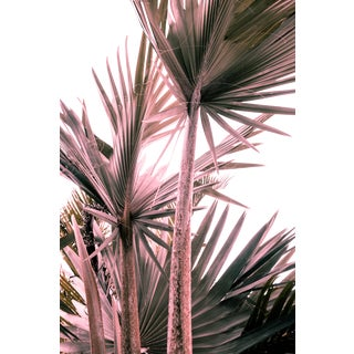 Special Edition Pink Palms III Fine Art Photo Print For Sale