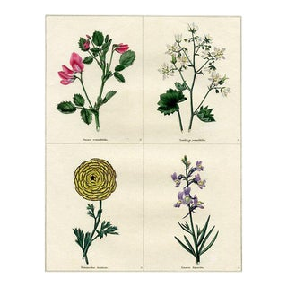 1829 English Botanical Print, Including Flax For Sale