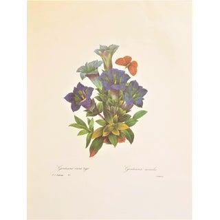 Pierre-Joseph Redouté Reproduction Gentiana Bunch Botanical Print For Sale