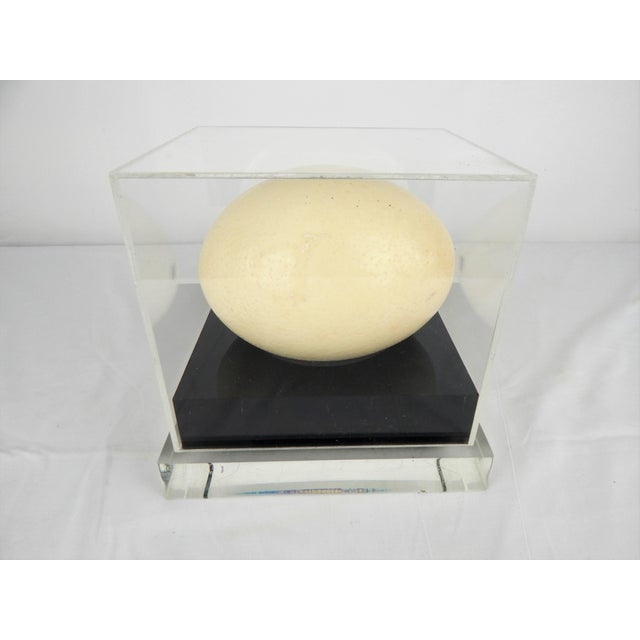 Mid-Century Modern Lucite display case featuring natural Ostrich egg. Black Lucite base prominently displays the protected...