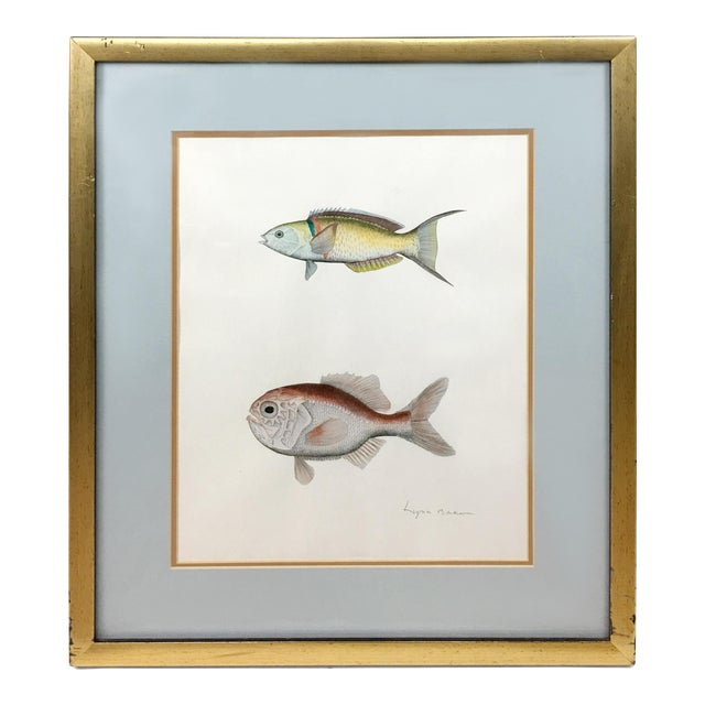 Pink and Yellow Freshwater Fish Couplet Origional Gouche Painting in ...
