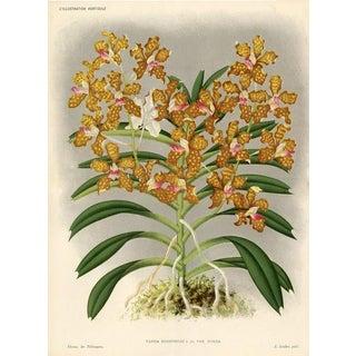 Roxburgh Vanda, 1885 Belgian Orchid Print For Sale