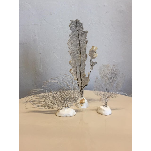 Vintage Grouping of Sea Fans - Set of 6 - Image 3 of 4