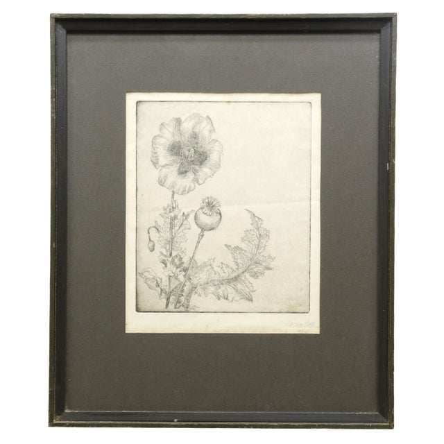 """1960s 1964 """"Poppies"""" Framed Etching on Paper by Lorna Bath, Framed For Sale - Image 5 of 5"""