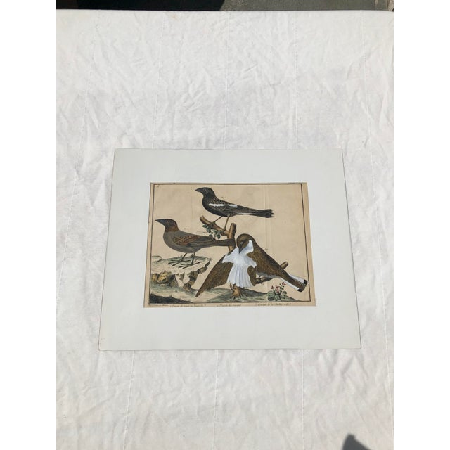 18th Century French Matted Bird Engraving by Martinet Featuring a Snow Pincer, a Senegalese Pincer and a Carolina Ortolan For Sale - Image 13 of 13