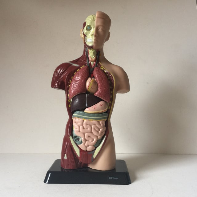 A medical model figure sculpture. Parts are removable.