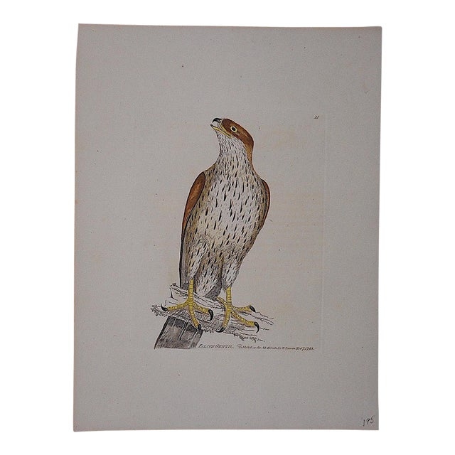 Antique 18th Century Bird Engraving For Sale