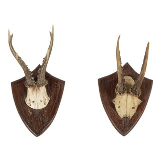 Vintage German Roe Deer Antlers - a Pair For Sale