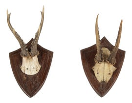 Image of Antler Curiosities