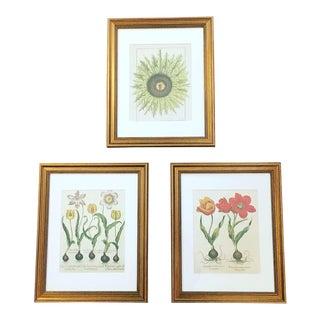 Taschen Botanical Framed Prints - Set of 3 For Sale