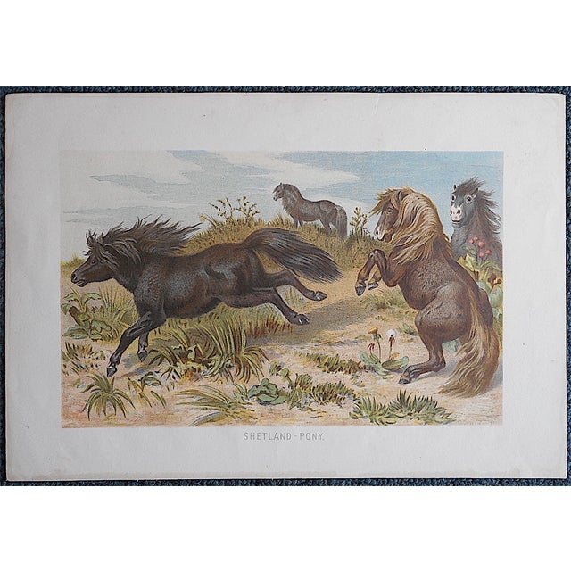 Antique Equine Lithograph - Image 2 of 3
