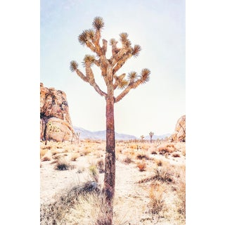 Original Joshua Tree Photograph, Unframed For Sale